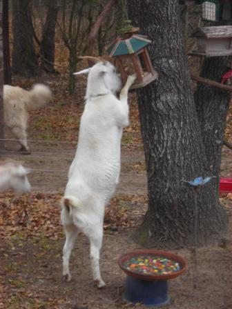 Lilly  at the bird feeder